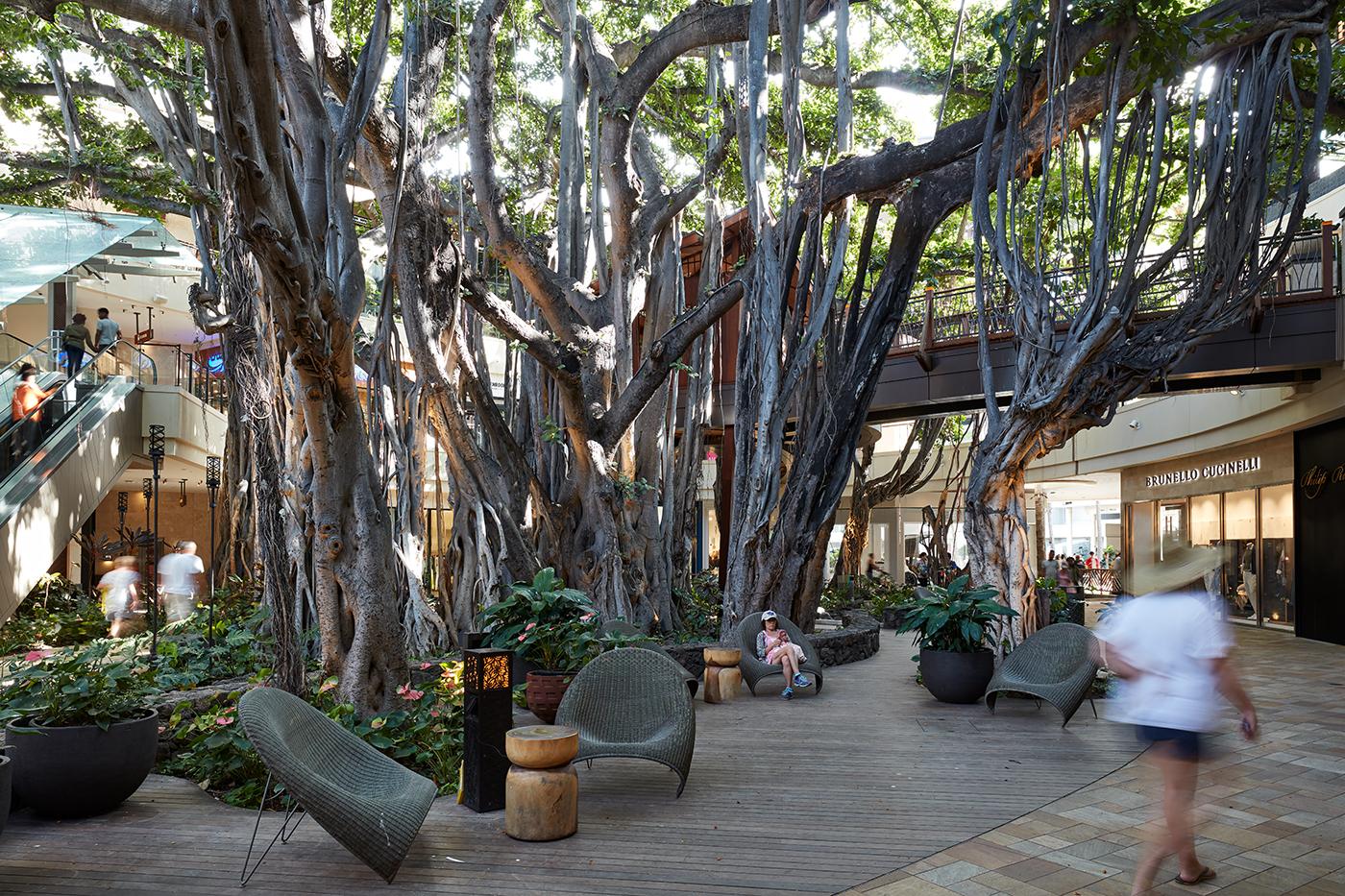 International Market Place Banyan Tree